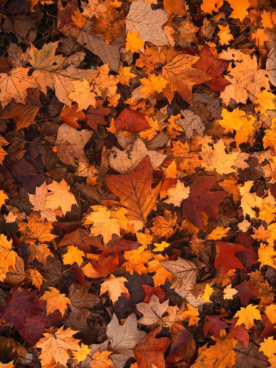 autumn-111315_1280